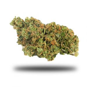 chocolope the weedsite
