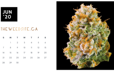 Download Free Weed Calendar and Wallpaper